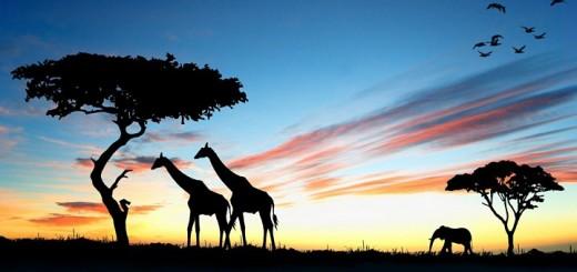 африка авіаквитки